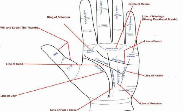 Career - Job - Business Line In Palmistry | AstroSanhita